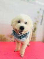 Top 2 Dịch vụ cắt tỉa lông thú cưng uy tín nhất tại Cần Thơ