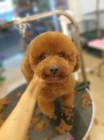 Top 5 Dịch vụ cắt tỉa lông thú cưng uy tín nhất tại Bình Dương